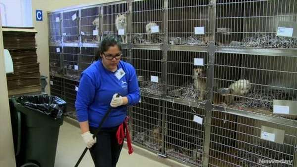 North Shore Animal League rescued dogs from shelters