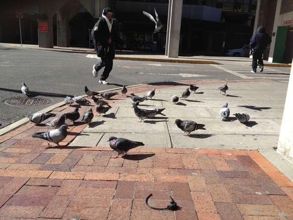 Pigeons feast on Cheetos left outside White Plains