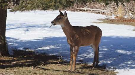 A deer walks by the South Shore Nature