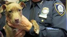 Suffolk County SPCA at the Town of Babylon