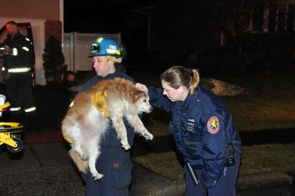 Rescuers comfort a dog who was revived with