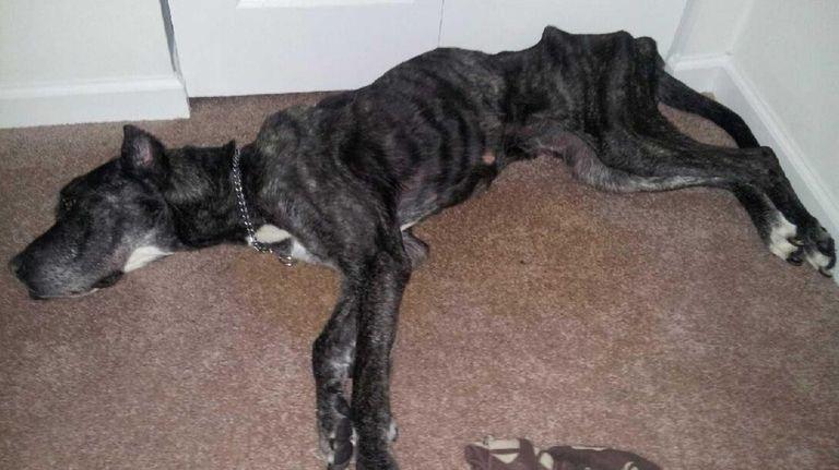 A dog named Queenie was found