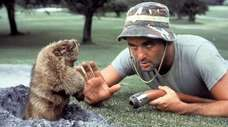"Bill Murray confronts a gopher in 1980's ""Caddyshack."""
