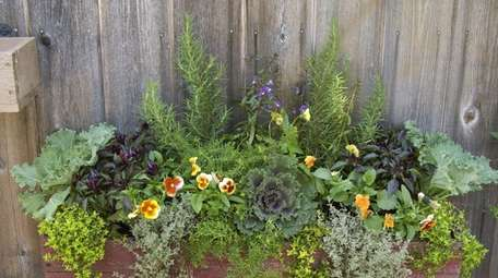 Window boxes made for the fall season at
