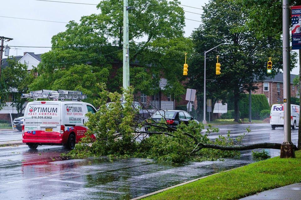 A fallen tree branch blocks two of the