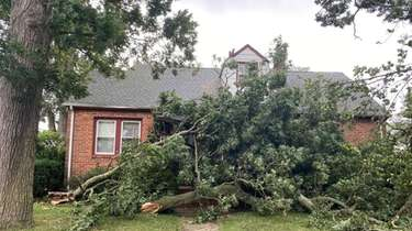Trees down due to high winds from Tropical