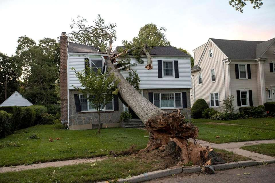 A trees split the upper level of this