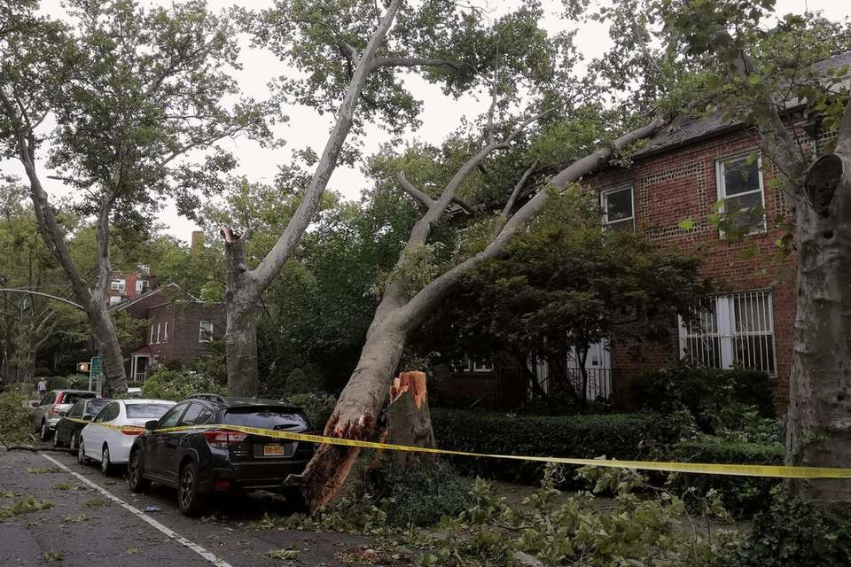 A tree is seen leaning on a house