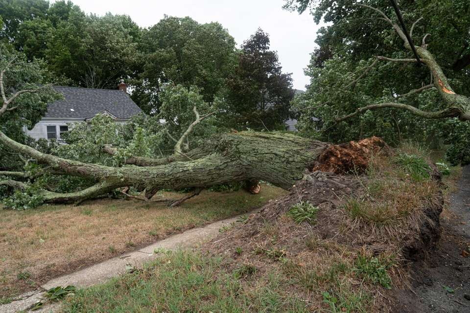An uprooted tree in Cutchogue as Tropical storm