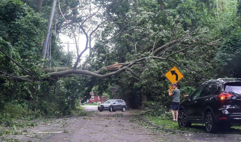 Cars negotiate their way around a Downed tree