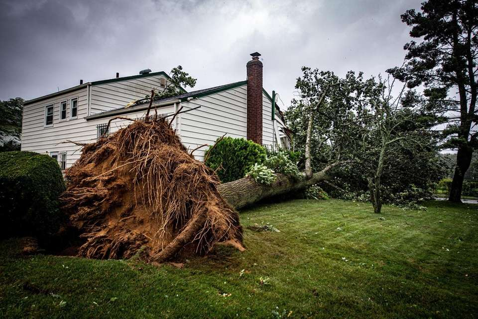 A large tree fell on a damaging a
