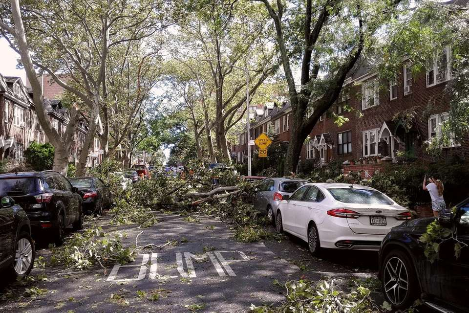 A tree is seen blocking 50th St between