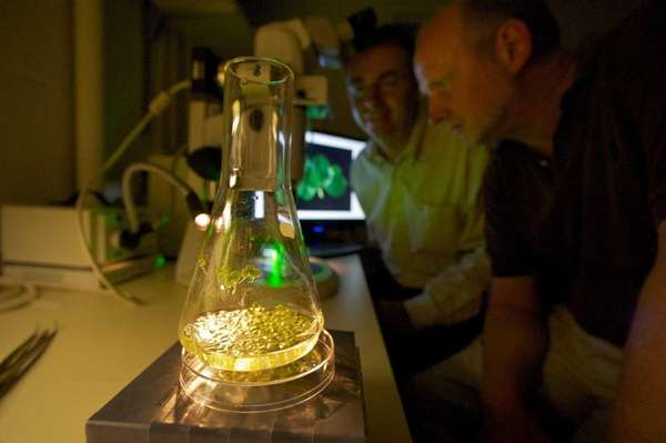 Researchers at Cold Spring Harbor Laboratory experiment with