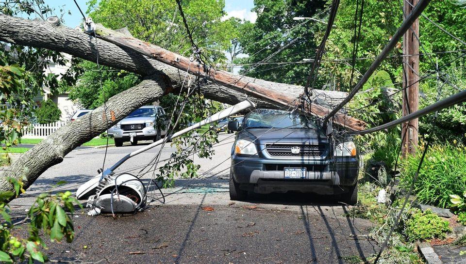 A fallen tree snapped a utility pole, took