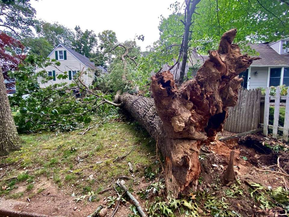 Tree uprooted and just missed hitting a house