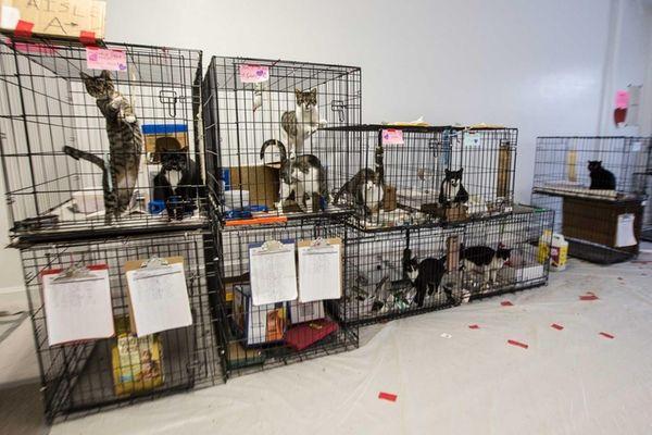 The Nassau OEM's pet shelter in Garden City