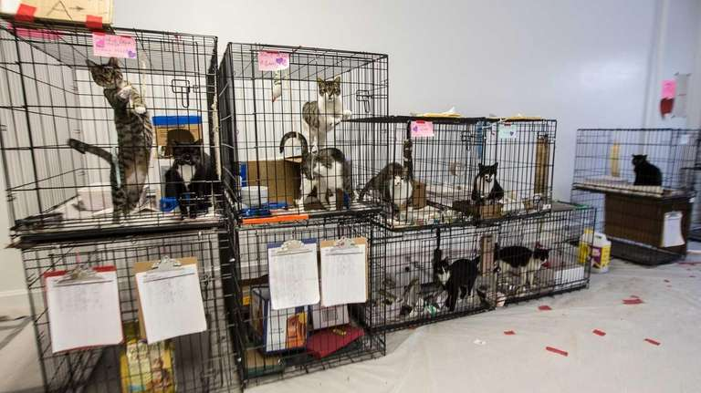 The Nassau OEM's pet shelter in Garden City