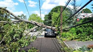 A fallen tree snapped a utility pole, took