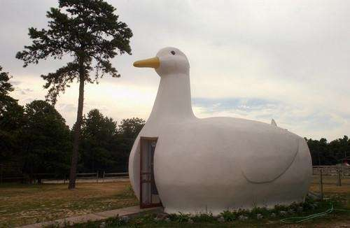 The Long Island Duck sits on Rte. 24