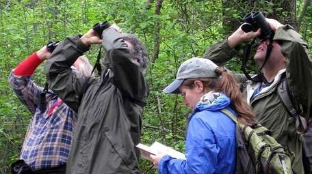 Bird watching programs to join on Long Island.