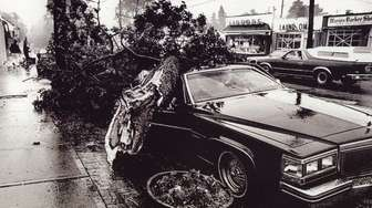 A tree fell on a car on Ponquogue