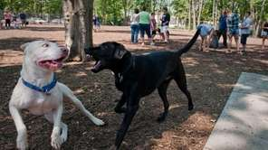 Two dogs play inside Oyster Bay Town's first