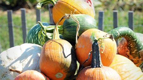 Stakey's Pumpkin Farm is offering socially distant pumpkin