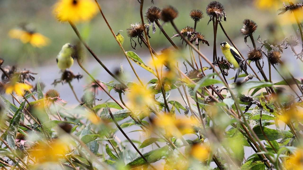 Simple ways to make your garden take flight for winged friends
