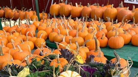Pumpkins like these are among the items typically