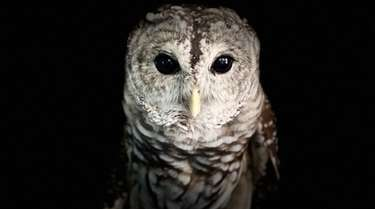The Sweetbriar Nature Center in Smithtown is hosting