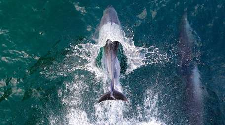 Environmentalists say seismic airgun blasts can prevent whales