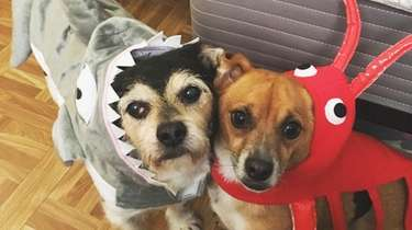 Dressed-up dogs Rocky and Rambo are both expected