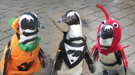 Penguin residents of the Long Island Aquarium in