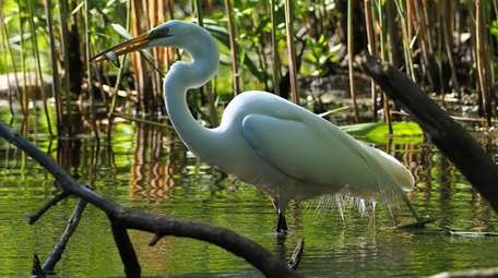 Paul Israelson captured this image of an egret