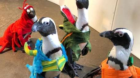 "Meet the ""penguin squad"" in costume during the"