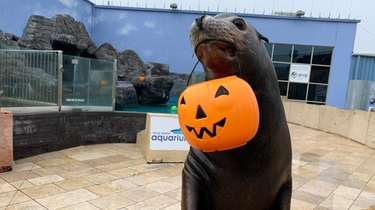 The Long Island Aquarium in Riverhead will host