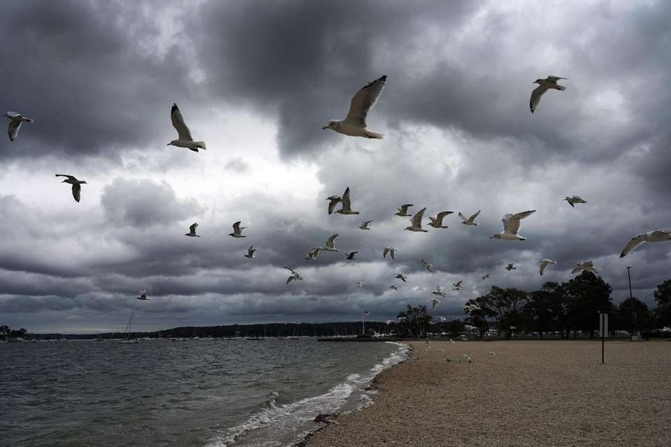 Seagulls fly over Oyster Bay, October 16, 2020