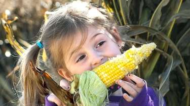 Olivia Konnikov enjoys roasted corn during a family