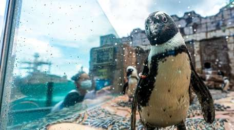 See the Penguin Pavilion, home to African penguins,