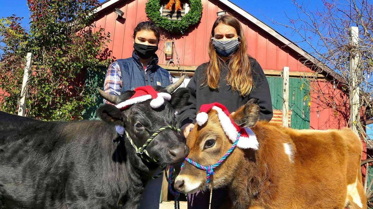 The Spirit's Promise Equine Rescue Program, a charity