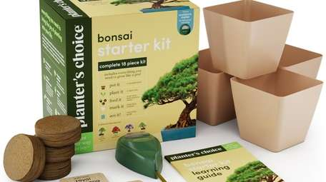 Deluxe bonsai starter kit at theplanterschoice.com.