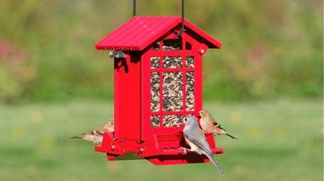 Squirrel-resistant bird feeder from  duncraft.com.