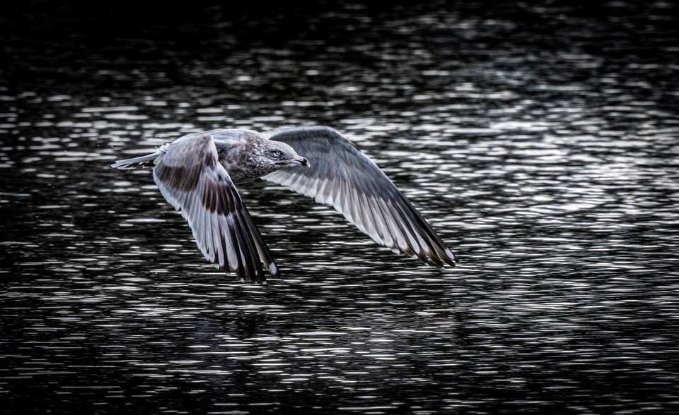 Birds swimming and flying around the pond on