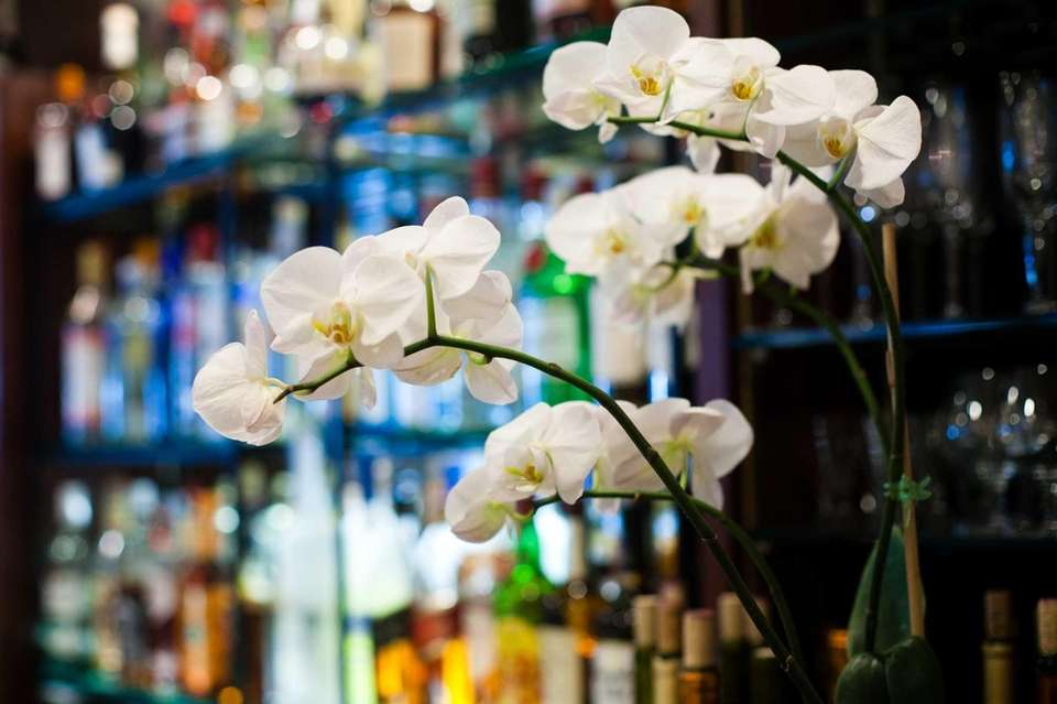 White orchids decorate the bar of the Le