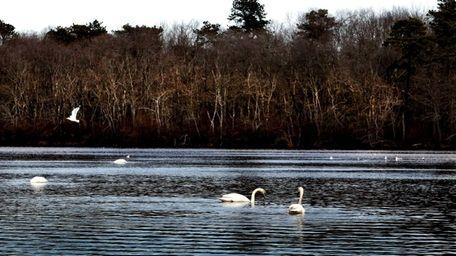 Connetquot River State Park Preserve, which borders Bohemia,