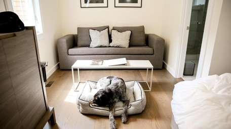The Roundtree Amagansett boutique hotel offers canine guests