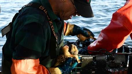 Captain Phil Karlin of Riverhead unloads conch from