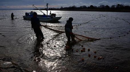 Menhaden fishermen haul in their net on the