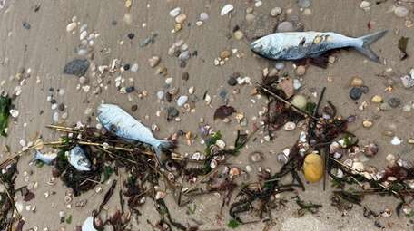 Some of the fish that have washed up