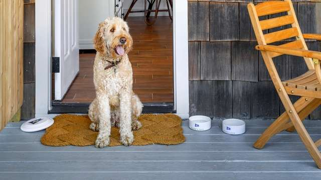 Dogs are welcome to accompany guests staying at